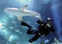 Két cápával gazdagodott a Tropicarium!