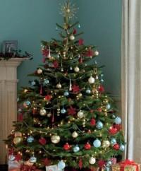 Rendelje meg karácsonyfáját idén is HungaryCard kedvezménnyel!