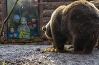 Február másodikán lessük a medvét a Szegedi Vadasparkban!