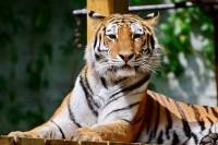 Állatok Világnapja a Miskolci Állatkertben 2020. október 4-én!