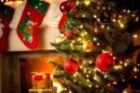 Ne vágj ki minden fát... Idei karácsonyfáját is rendelje meg online - HungaryCard kedvezménnyel!