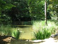 A Budakeszi Arborétum most is várja a látogatókat!
